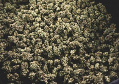 tokem_cannabis_flower-1